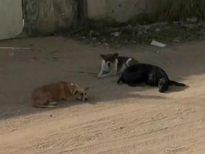 cachorros (Foto: Reprodução / TV Sudoeste)