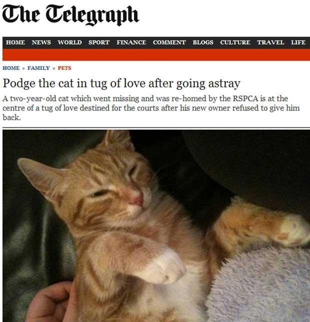 Gato que fugiu de casa no Reino Unido agora é disputado por duas famílias (Foto: Reprodução)