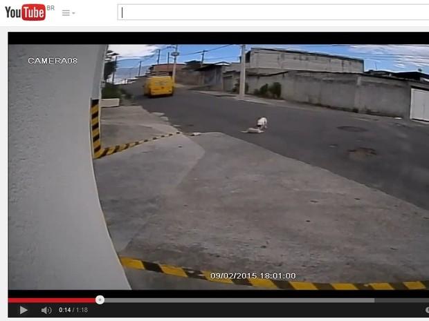 Após o atropelamento, segundo cão surge para ajudar amigo (Foto: Reprodução/YouTube)