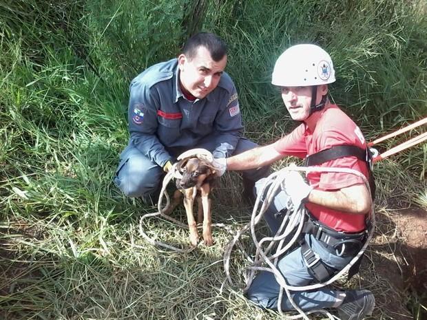 Cão foi salvo depois que caiu em poço de 20 m de profundidade (Foto: Divulgação/Bombeiros de Mairinque)
