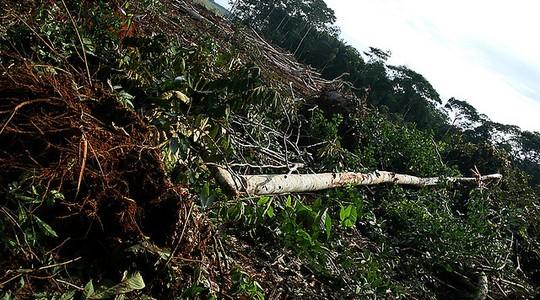 O desmatamento alcança até as UCs (Foto: Eduardo Santos)