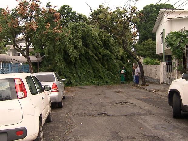 Árvore cai no bairro Jardim Baiano, em Salvador (Foto: Imagem/TV Bahia)