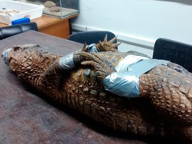 Animal no centro de pesquisas da Ucsal, em Pituaçu (Foto: Divulgação/ Ucsal)