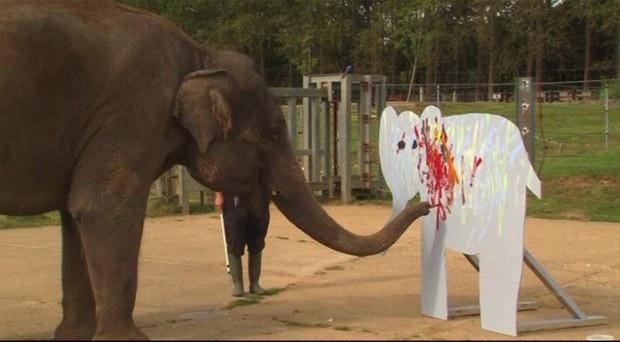 Elefanta pintora tem obras leiloadas em Londres (Foto: BBC)