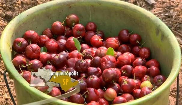 Irrigação ajudou produtores de acerola na região de Junqueirópolis (Foto: Reprodução/TV Globo)