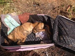 Veterinária resgatou o animal e agora realiza o tratamento (Foto: Aliny Ripke/Arquivo Pessoal)