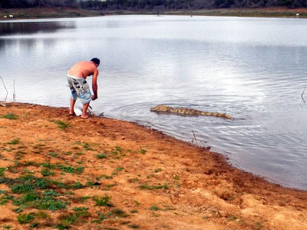 Jacaré amizade Bahia (Foto: Altier Souza/www.destaquebahia.com.br)