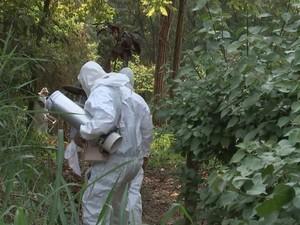 Agentes procuram por mosquitos na mata em Potirendaba (Foto: Reprodução/TV TEM)