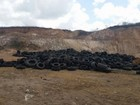 Mais de 8 mil pneus velhos são recolhidos de municípios de Alagoas