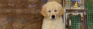 Pet shops deverão garantir saúde e segurança aos animais (Divulgação)