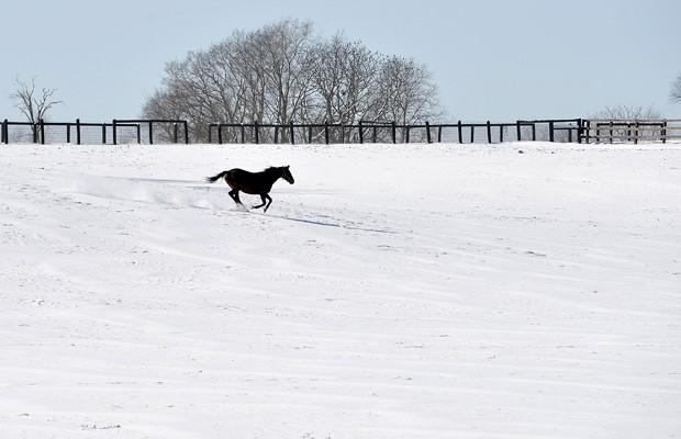 Um cavalo atravessa um campo coberto de neve em em fazenda de Upson Downs. No local, caíram de 3 a 6 centímetros de neve. (Foto: Timothy D. Easley/AP)