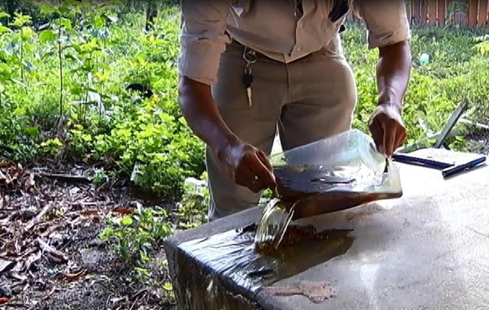 Agente de endemias à caça do mosquito Aedes aegypti, transmissor da dengue, chikungunya e zika. (Foto: Reprodução/TV Tapajós)