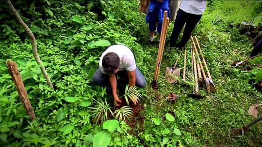 Verdejando inicia mutirões de plantio de árvores em São Paulo