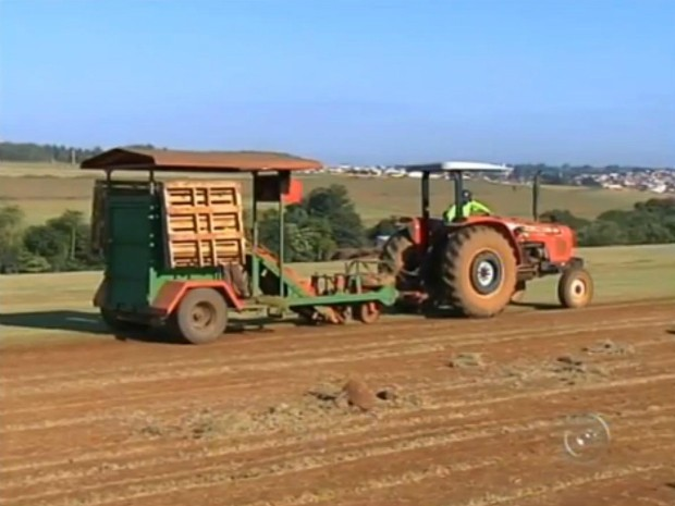 Na região sudoeste de SP, a produção de grama ocupa uma área de cinco mil hectares (Foto: Reprodução / TV TEM)
