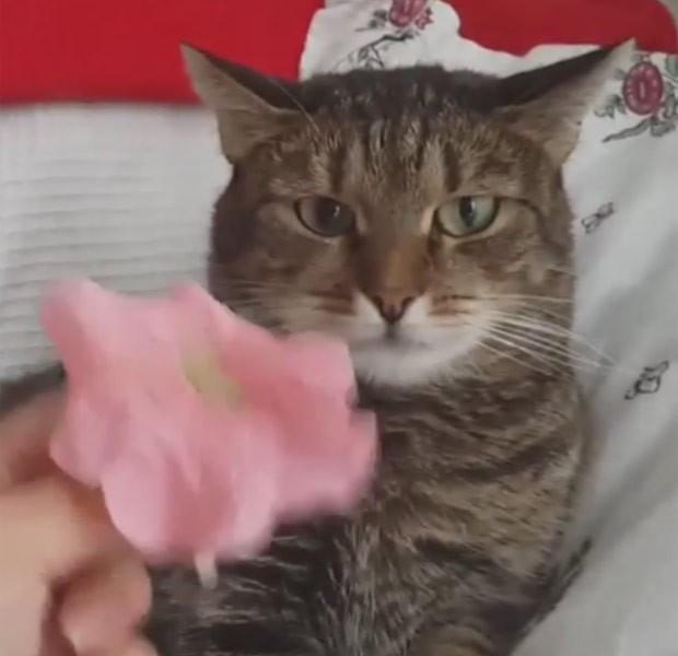 No vídeo, felino observa enquanto sua dona canta segurando a flor (Foto: Reprodução/YouTube/Lolzing4gifs)