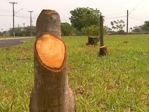 A CPFL contratou poda de árvores por riscos à rede elétrica e moradores reclamaram em Ribeirão Preto (Foto: Reprodução/EPTV)