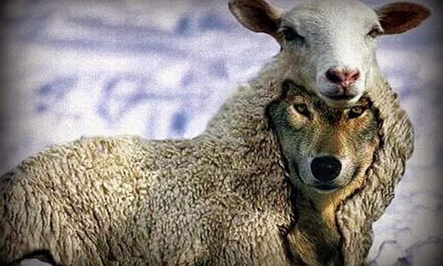 Lobo em pele de cordeiro  (Foto: Arquivo Google)