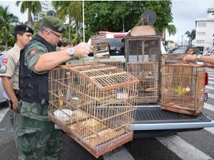 Algumas aves foram devolvidas de forma espontânea pelos criadores  (Foto: Walter Paparazzo/G1)