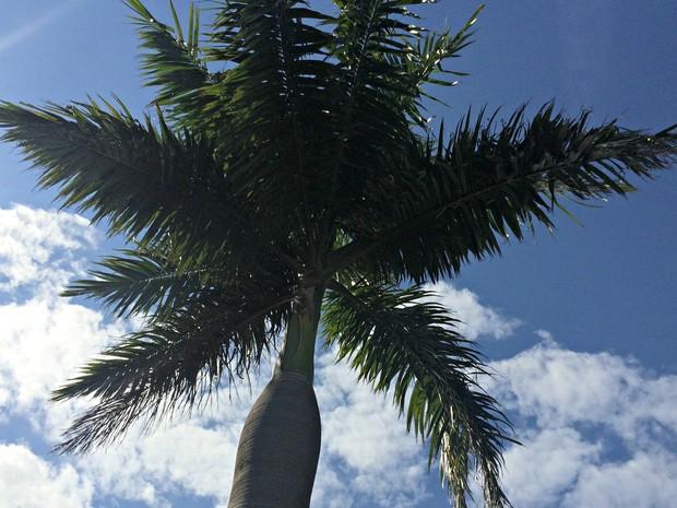 Céu com poucas nuvens nesta segunda-feira em Campo Grande (Foto: Isabela Cavalcante/G1 MS)
