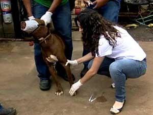 Cachorro sendo examinado por agente do CCZ (Foto: Reprodução / TV Integração)