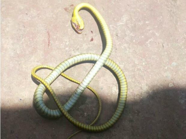Cobra Acre (Foto: Dayane Leite/Arquivo Pessoal)