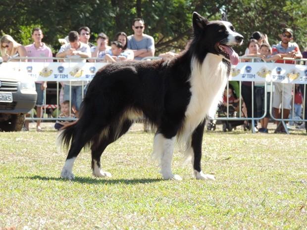 Pista de agility teve cães treinados e várias atrações (Foto: Alan Schneider/G1)