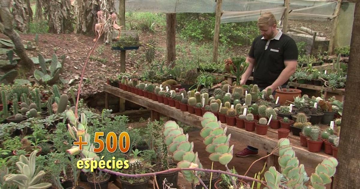 c2e88ffbd G1 - Dica Verde  cultive plantas exóticas com pouca água e solos nutritivos  - notícias em Caminhos do Campo