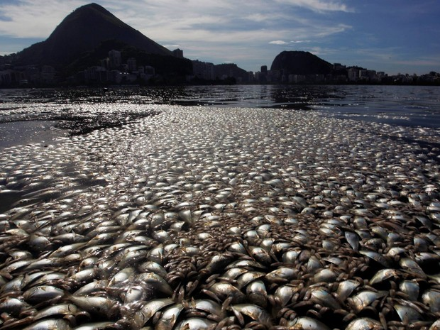 Peixes mortos na Lagoa Rodrigo de Freitas (Foto: Gabriel de Paiva/ Agência O Globo)