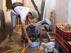 Rio Preto registra nove mil casos de dengue neste ano