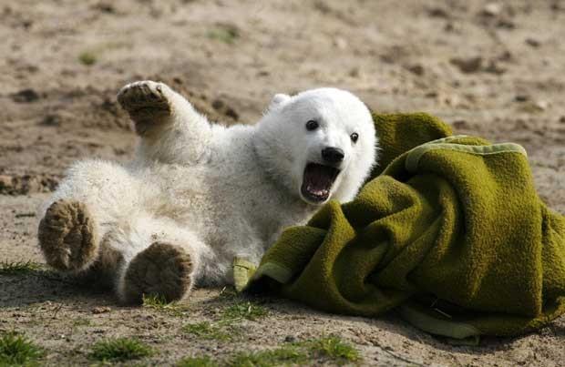 Imagem de março de 2007 mostra Knut em sua primeira aparição pública no Zoológico de Berlim (Foto: Reuters)