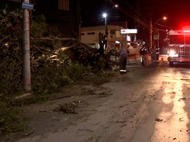Árvore caiu e atingiu mulher no bairro Cambuí, em Campinas (Foto: Reprodução / EPTV)