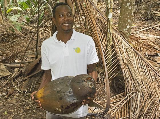 Um coco-do-mar normal pesa entre 15 e 30 quilos (Foto: © Haroldo Castro/Época)