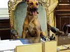 Presidente da Argentina publica foto de cão em cadeira presidencial