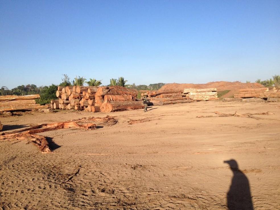 Operação Máfia de Toras irá interromper atividades de madereiras que estão sendo investigadas (Foto: Polícia Federal/Divulgação )