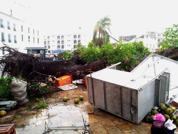 Mangueira caiu em frente a Casa das 11 Janelas, no bairro da Cidade Velha (Foto: Jhivago Andrade/Arquivo Pessoal)