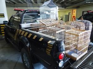 Animais serão devolvidos para sede do Ibama.  (Foto: Divulgação/Ascom Ibama)
