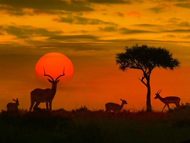 África (Foto: Thinkstock)