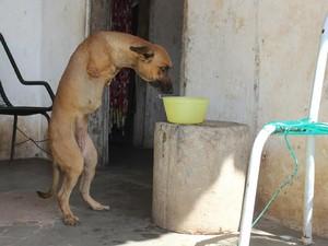 Animal consegue se levantar sozinho para caminhar (Foto: Gustavo Almeida/G1)