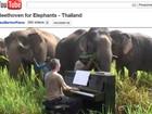 Britânico toca Beethoven para elefantes cegos na Tailândia