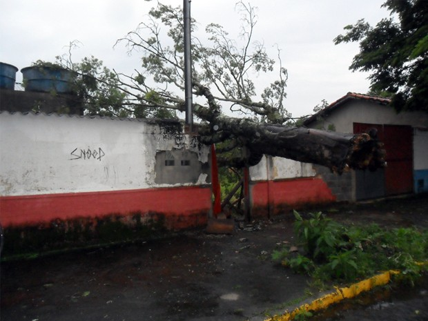 Árvore cai sobre estádio em São Lourenço (MG). (Foto: Marcos Jose de Oliveira / VC no G1)