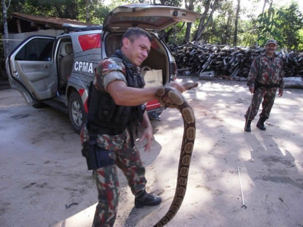 Desmatamento de florestas faz com que animais invadam residências, diz polícia ambiental (Foto: PMA/Divulgação)