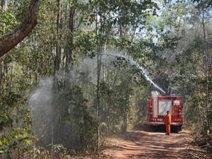 Combate a ancêndio na Floresta Nacional de Palmares, no Piauí (Foto: Francisco Gilásio/CCOM)