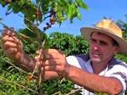 Projeto quer incentivar aumento na produção de café em Mato Grosso