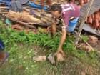 Moradores tentam resgatar cães de escombros após casa desabar no PI