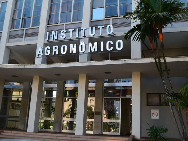 Instituto Agronômico de Campinas (IAC) (Foto: Roberta Steganha/ G1)