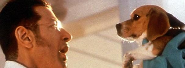 como cães e gatos (Foto: reprodução/divulgação)