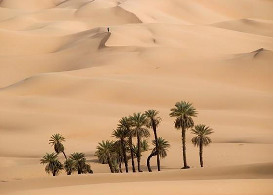 Uma paisagem típica do Saara: dunas e tamareiras criam um pequeno oásis; ao fundo, um ponto marca a presença humana (Foto: © Haroldo Castro/ÉPOCA)