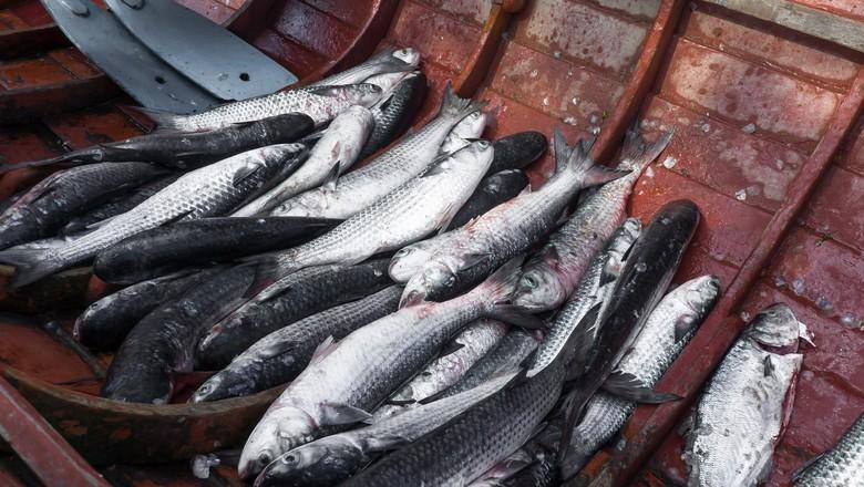 peixe-pescaria-barco-pescado (Foto: Noel Portugal/CCommons)
