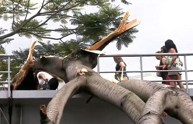Pedestres passam por baixo de árvore que caiu sobre passarela do Terminal Bandeira, no Centro de SP (Foto: TV Globo/Reprodução)