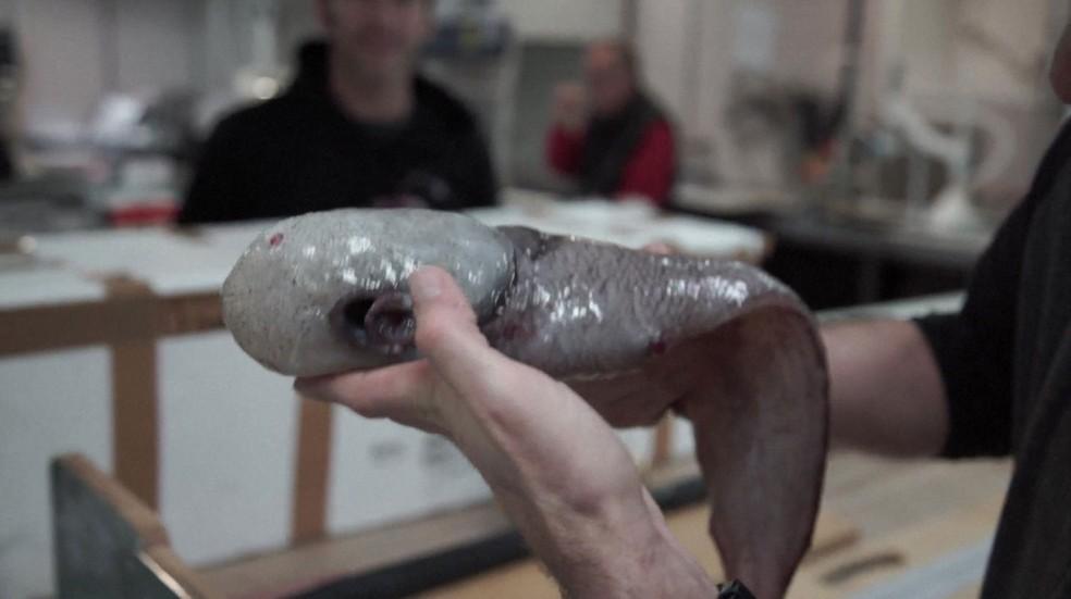 Resultado de imagem para peixe sem cara
